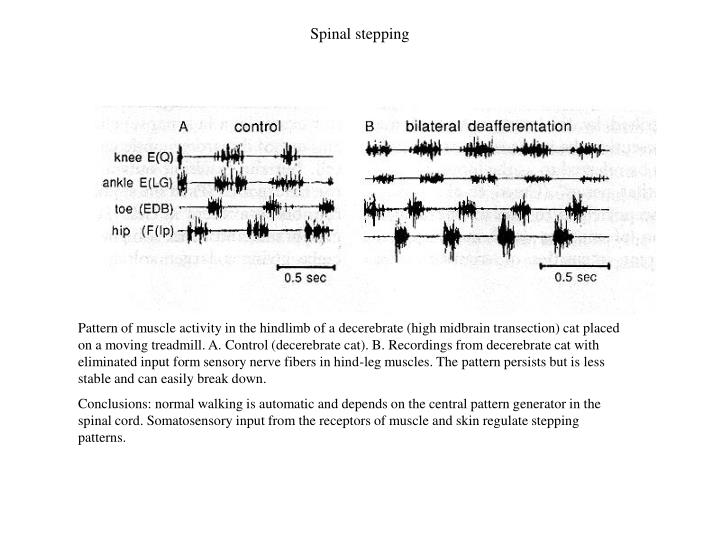 Spinal stepping