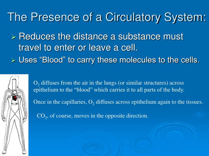 The presence of a circulatory system