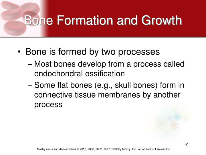 Bone Formation and Growth