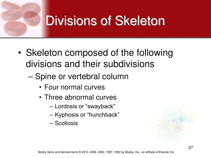 Divisions of Skeleton
