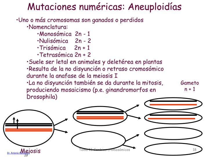 Mutaciones numéricas: Aneuploidías