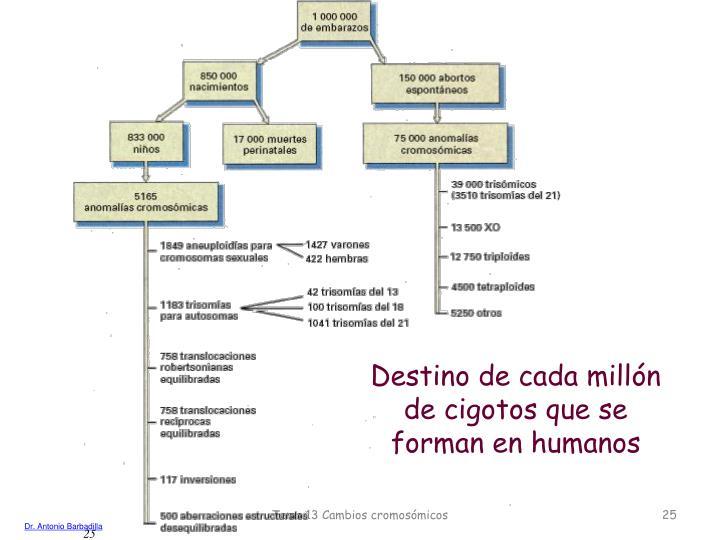 Destino de cada millón de cigotos que se forman en humanos