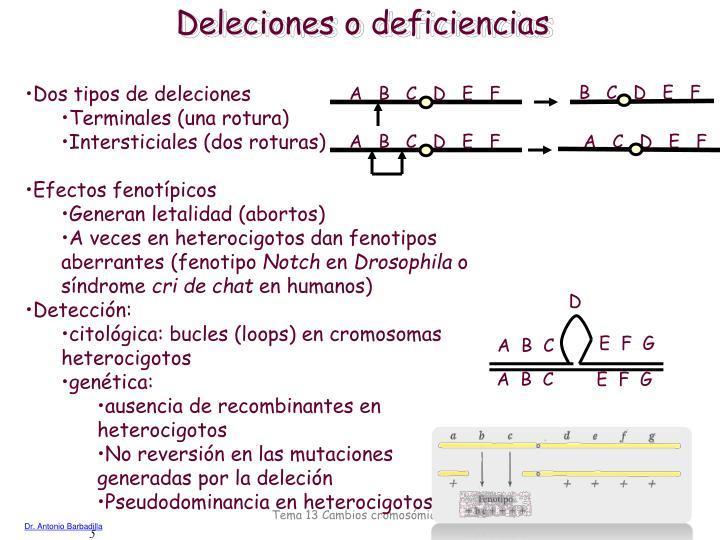 Deleciones o deficiencias