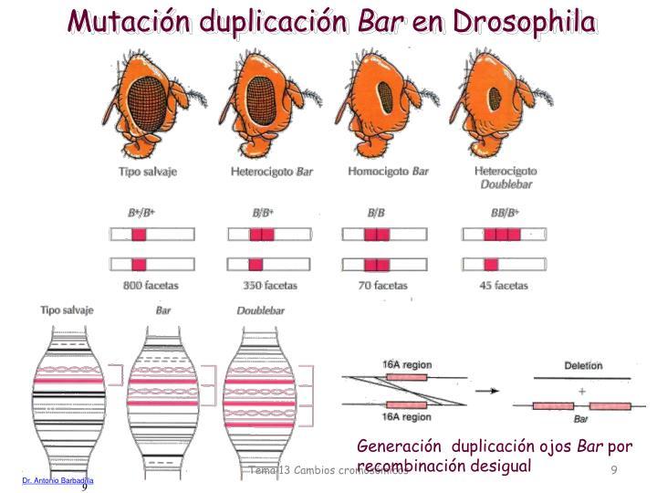 Mutación duplicación