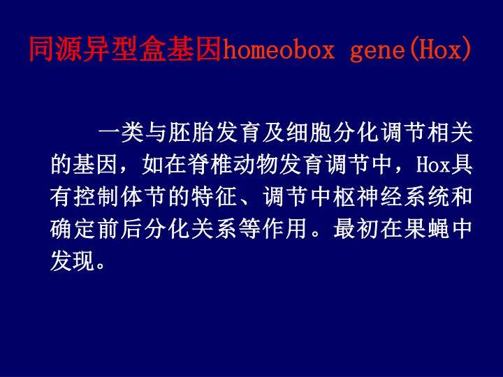 同源异型盒基因