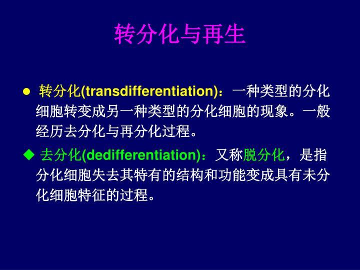 转分化与再生