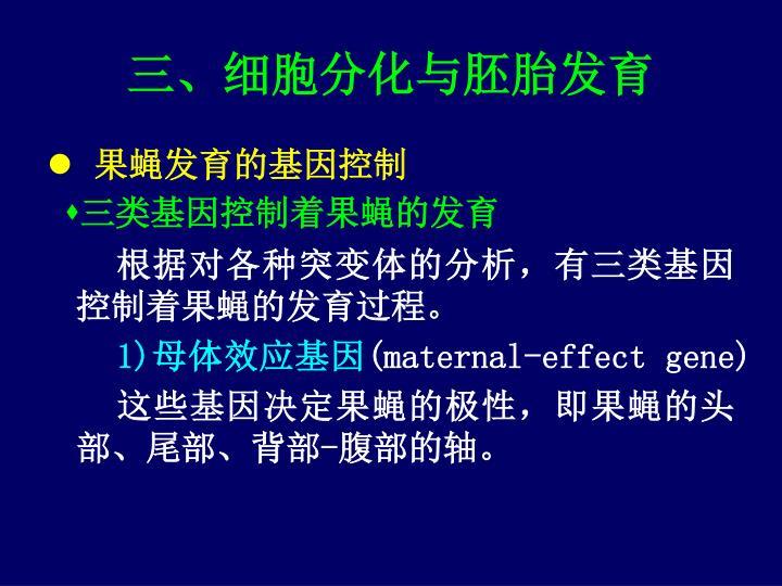 三、细胞分化与胚胎发育