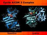 cyclin a cdk 2 complex1