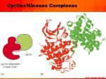 cyclins kinases complexes