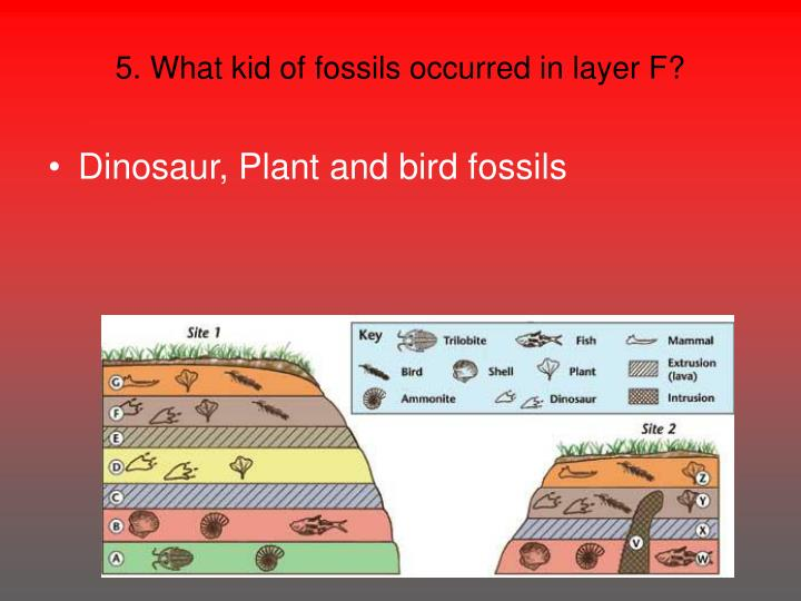 5. What kid of fossils occurred in layer F?