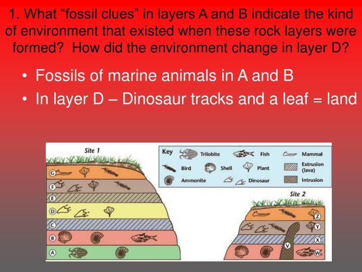 """1. What """"fossil clues"""" in layers A and B indicate the kind of environment that existed when these rock layers were formed?  How did the environment change in layer D?"""