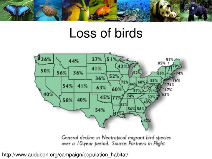 Loss of birds