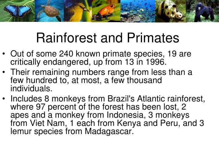 Rainforest and Primates