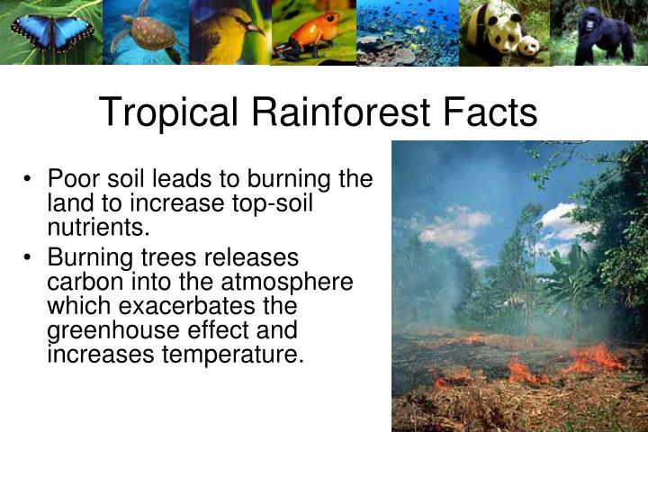 Tropical Rainforest Facts