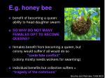 e g honey bee
