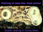 policing of caste fate food control