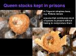 queen stocks kept in prisons