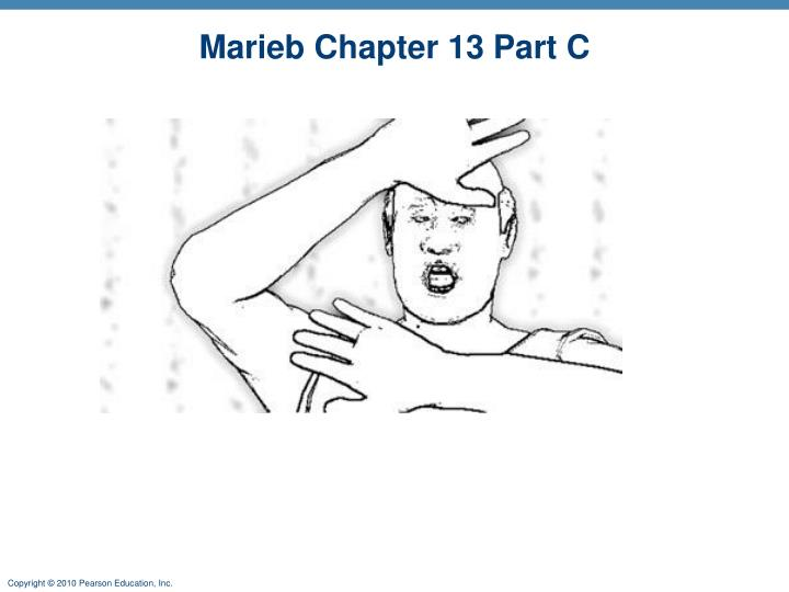 PPT Marieb Chapter 13 Part C PowerPoint Presentation ID