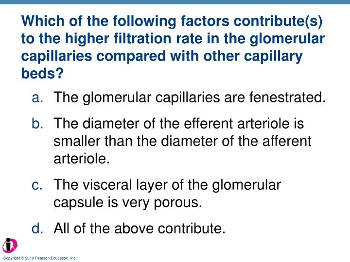 Which of the following factors contribute(s) to the higher filtration rate in the glomerular capillaries compared with other capillary beds?