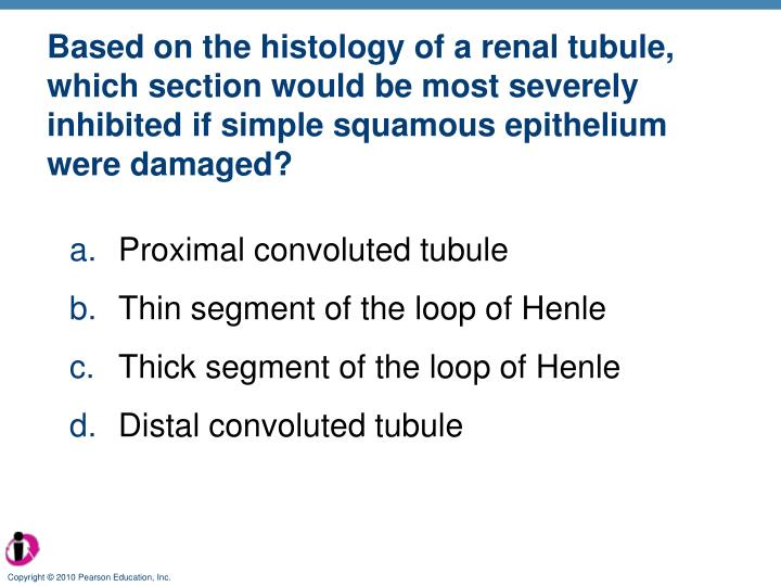 Based on the histology of a renal tubule, which section would be most severely inhibited if simple squamous epithelium were damaged?