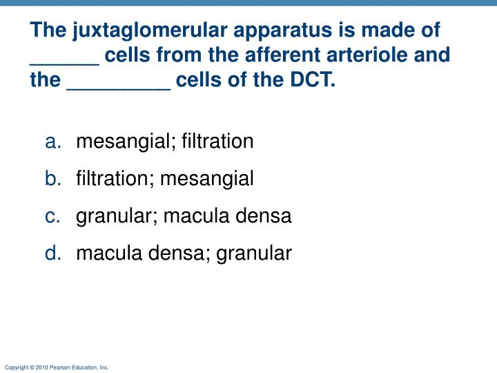 The juxtaglomerular apparatus is made of ______ cells from the afferent arteriole and the _________ cells of the DCT.