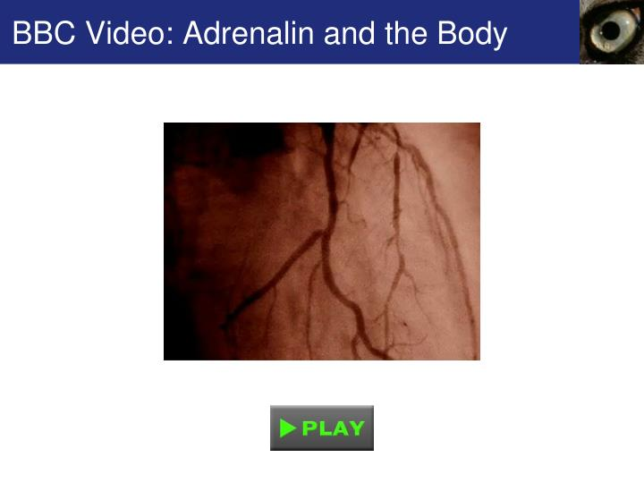 BBC Video: Adrenalin and the Body