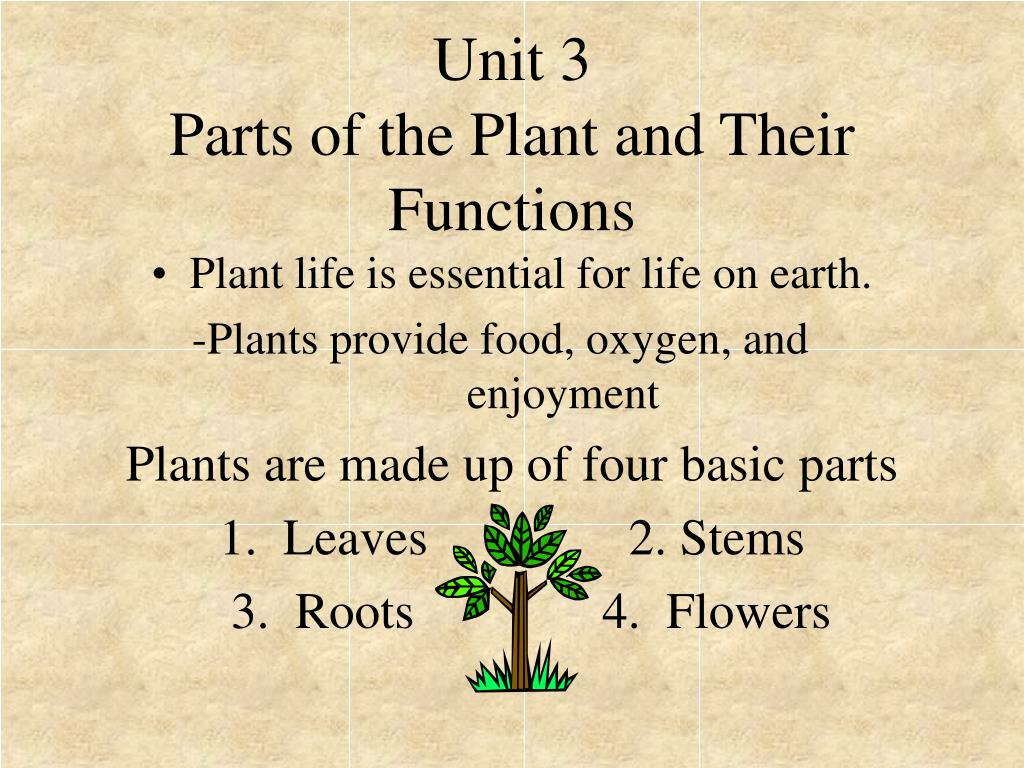 ppt unit 3 parts of the plant and their functions powerpoint