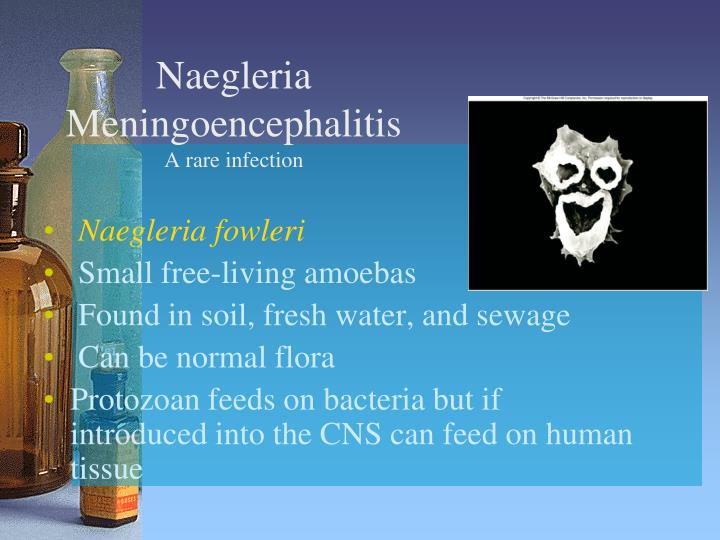 Naegleria Meningoencephalitis