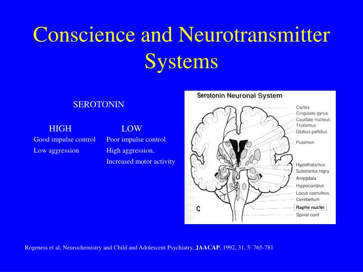 Conscience and Neurotransmitter Systems