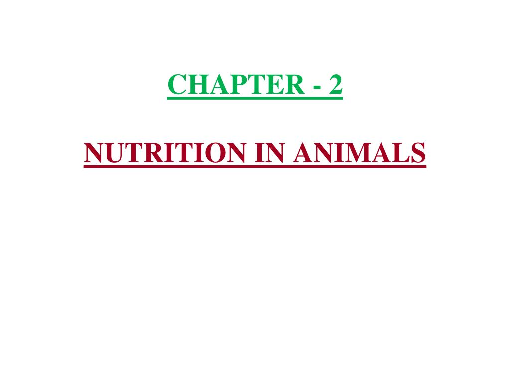 Ppt Chapter 2 Nutrition In Animals Powerpoint Presentation Id