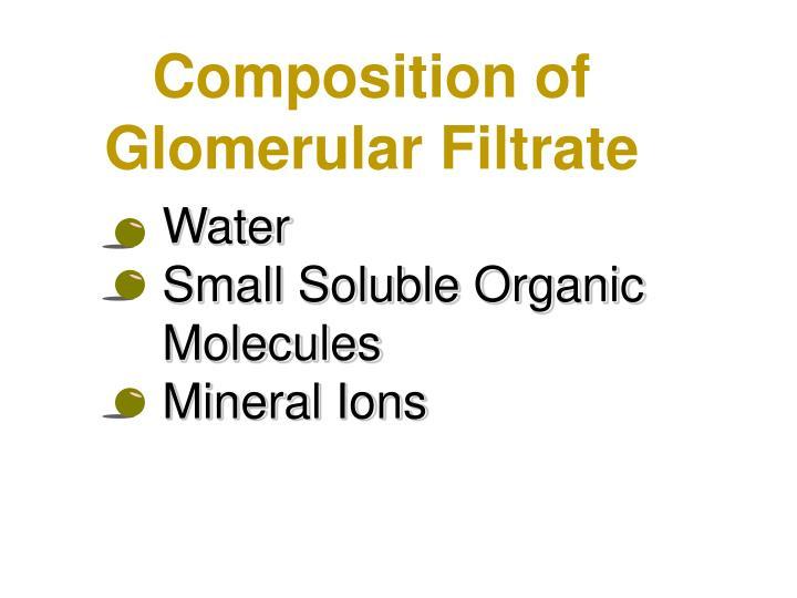 Composition of Glomerular Filtrate