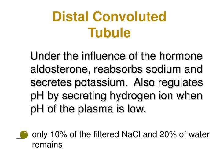 Distal Convoluted Tubule