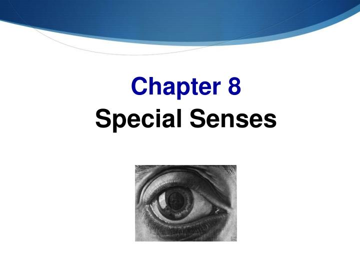 PPT - Chapter 8 Special Senses PowerPoint Presentation ...