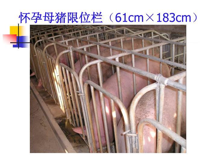 怀孕母猪限位栏