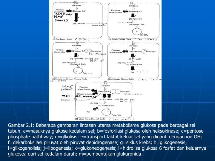 Gambar 2.1: Beberapa gambaran lintasan utama metabolisme glukosa pada berbagai sel tubuh. a=masuknya glukose kedalam sel; b=fosforilasi glukosa oleh heksokinase; c=pentose phosphate pathhway; d=glkolisis; e=transport laktat keluar sel yang diganti dengan ion OH; f=dekarboksilasi piruvat oleh piruvat dehidrogenase; g=siklus krebs; h=glikogenesis; i=glikogenolisis; j=lipogenesis; k=glukoneogenesis; l=hidrolisa glukosa 6 fosfat dan keluarnya glukosea dari sel kedalam darah; m=pembentukan glukuronida.