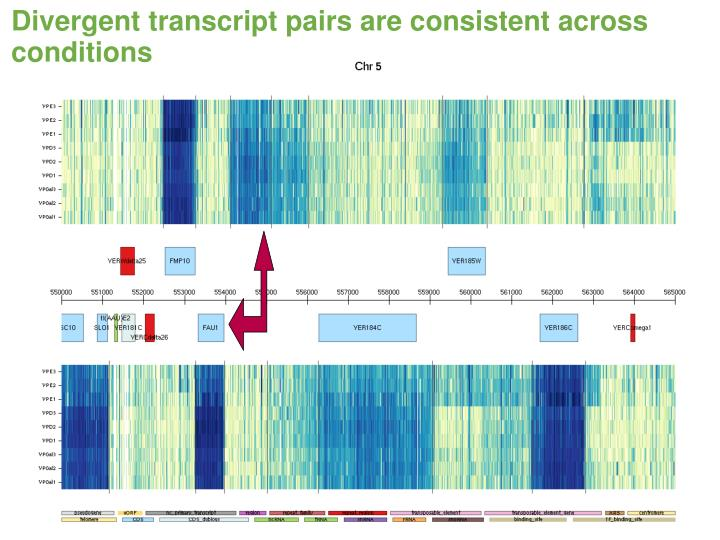 Divergent transcript pairs are consistent across conditions