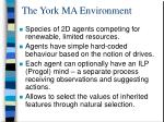 the york ma environment