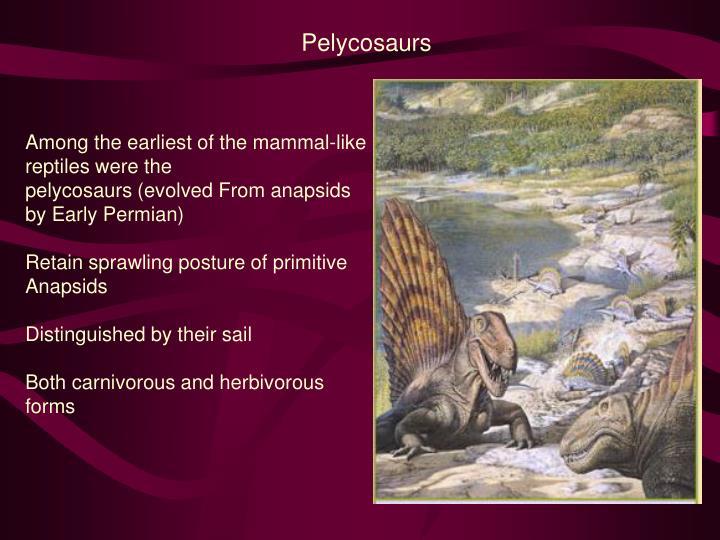 Pelycosaurs