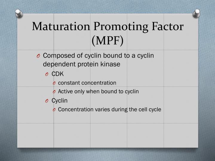 Maturation Promoting Factor (MPF)