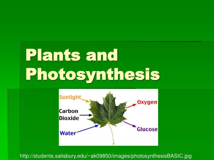 plants and photosynthesis n.