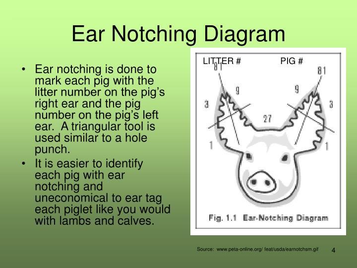 Ppt Care Of The Newborn Animal Powerpoint Presentation Id6111861