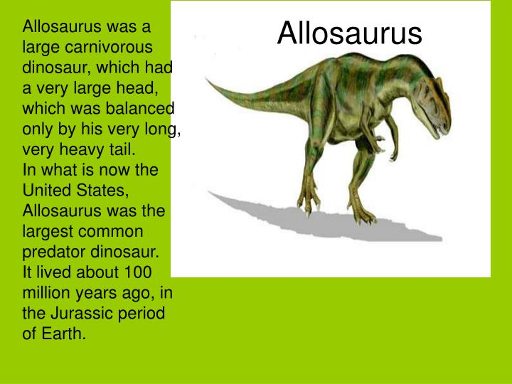 Allosaurus was a large carnivorous dinosaur, which had a very large head, which was balanced only by his very long, very heavy tail.