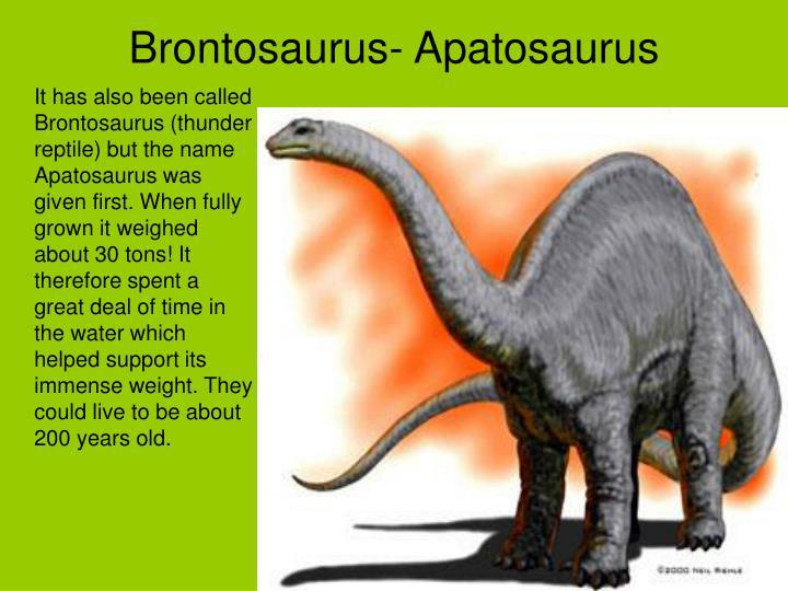 Brontosaurus- Apatosaurus