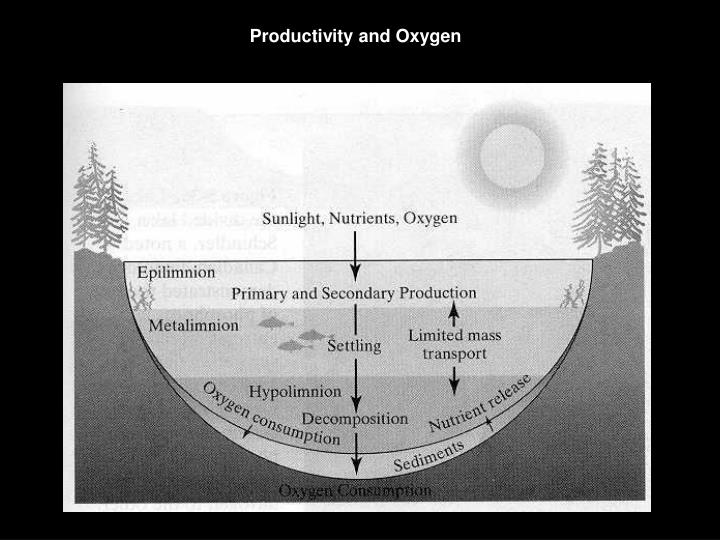 Productivity and Oxygen