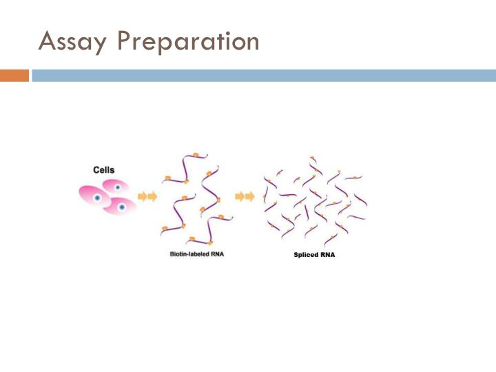 Assay Preparation