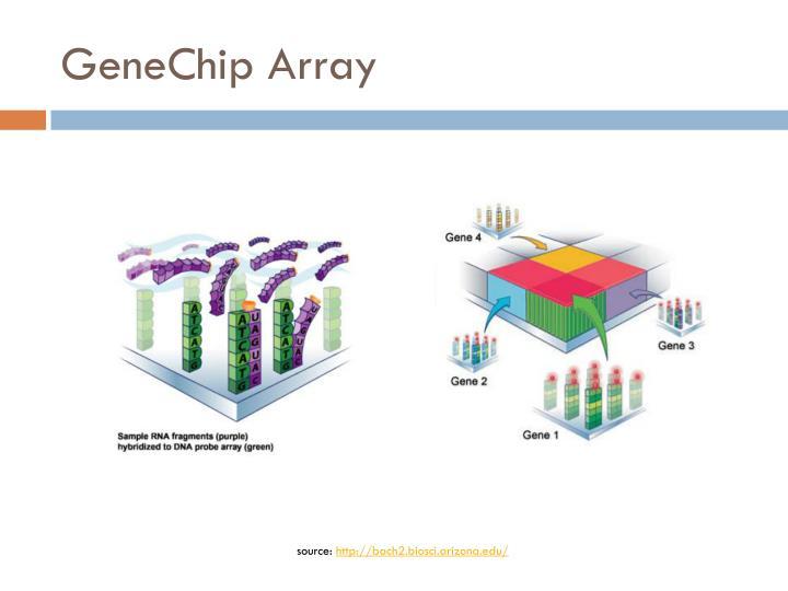 GeneChip Array