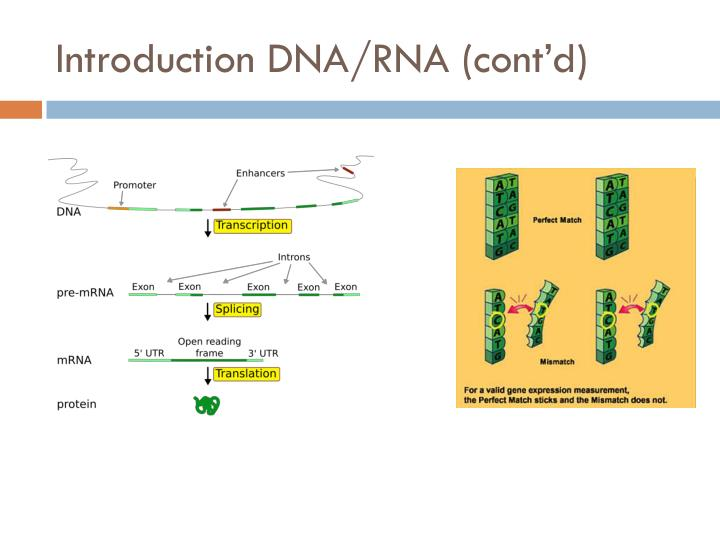 Introduction DNA/RNA (cont'd)