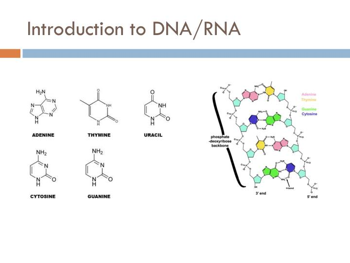 Introduction to dna rna