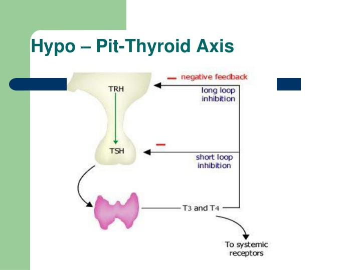 Hypo – Pit-Thyroid Axis