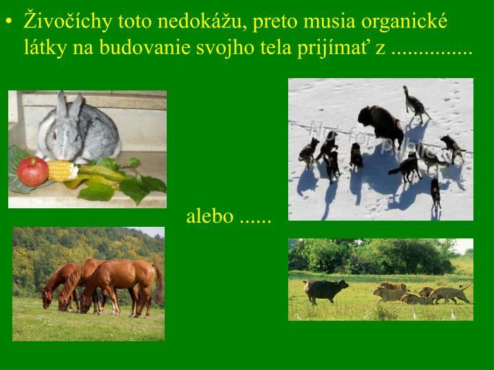 Živočíchy toto nedokážu, preto musia organické látky na budovanie svojho tela prijímať z ...............